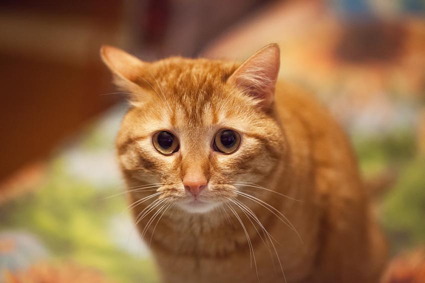 Muitas coisas podem causar estresse nos gatos, qualquer mudança na rotina ou no ambiente que ele está acostumado pode desestabilizar o bichano.