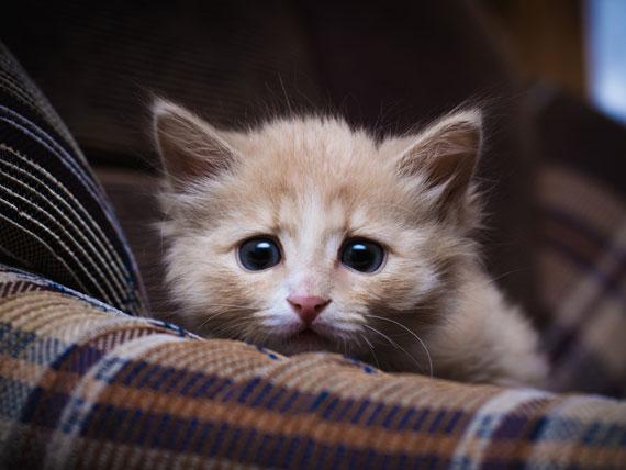 """Pets são muito sensitivos e muitas vezes """"absorvem"""" o estresse dos donos."""
