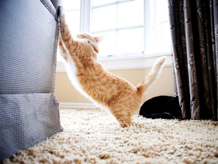 Oferecer arranhadores adequados é fundamental para evitar que o gato arranhe móveis e objetos que não deve.
