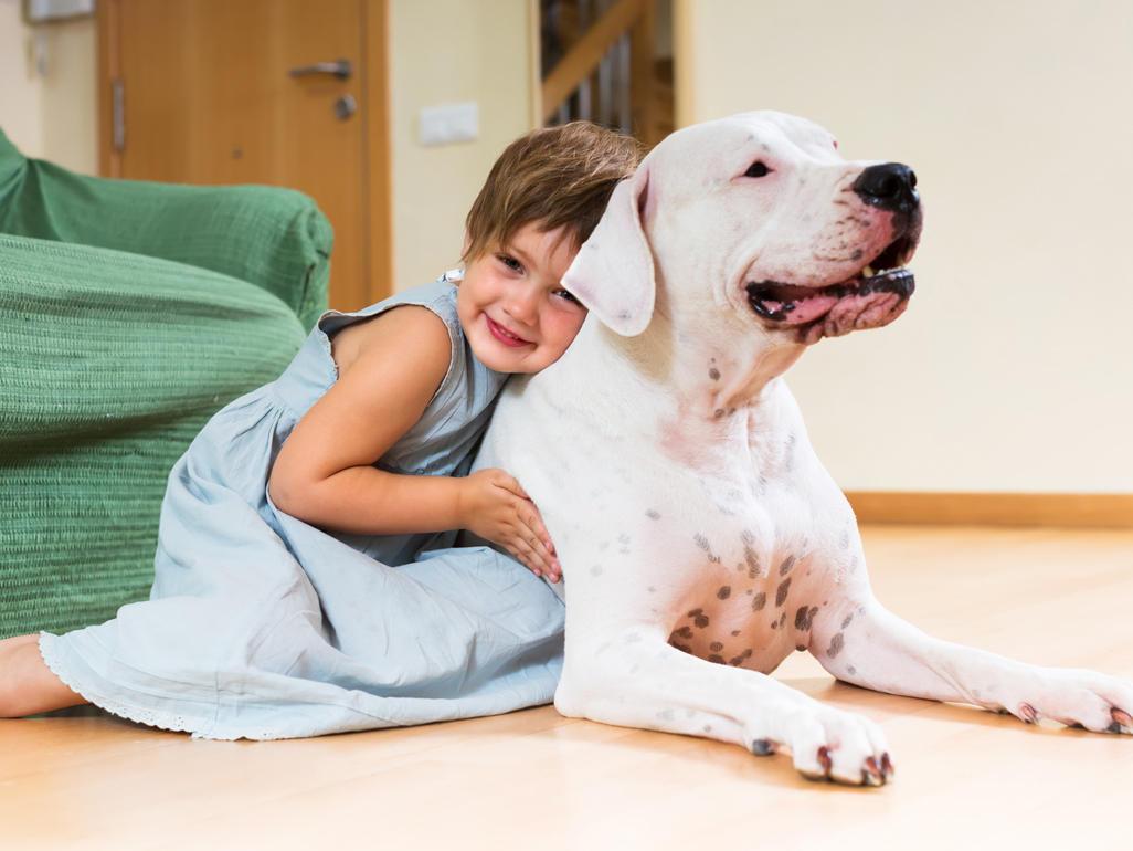 Cães e Crianças são grandes amigos, mas ambos precisam aprender a respeitar um ao outro