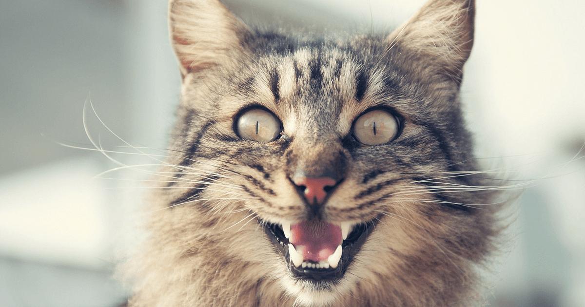 Gatos não gostam de mudanças na rotina e no ambiente que vivem, isso pode estressá-los e até torná-los agressivos com membros da casa.
