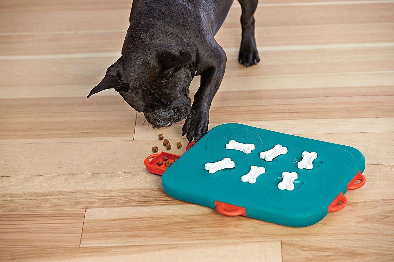 Os jogos inteligentes tem diversos níveis de dificuldade, alguns cães sentem a necessidade de aumentar o desafio
