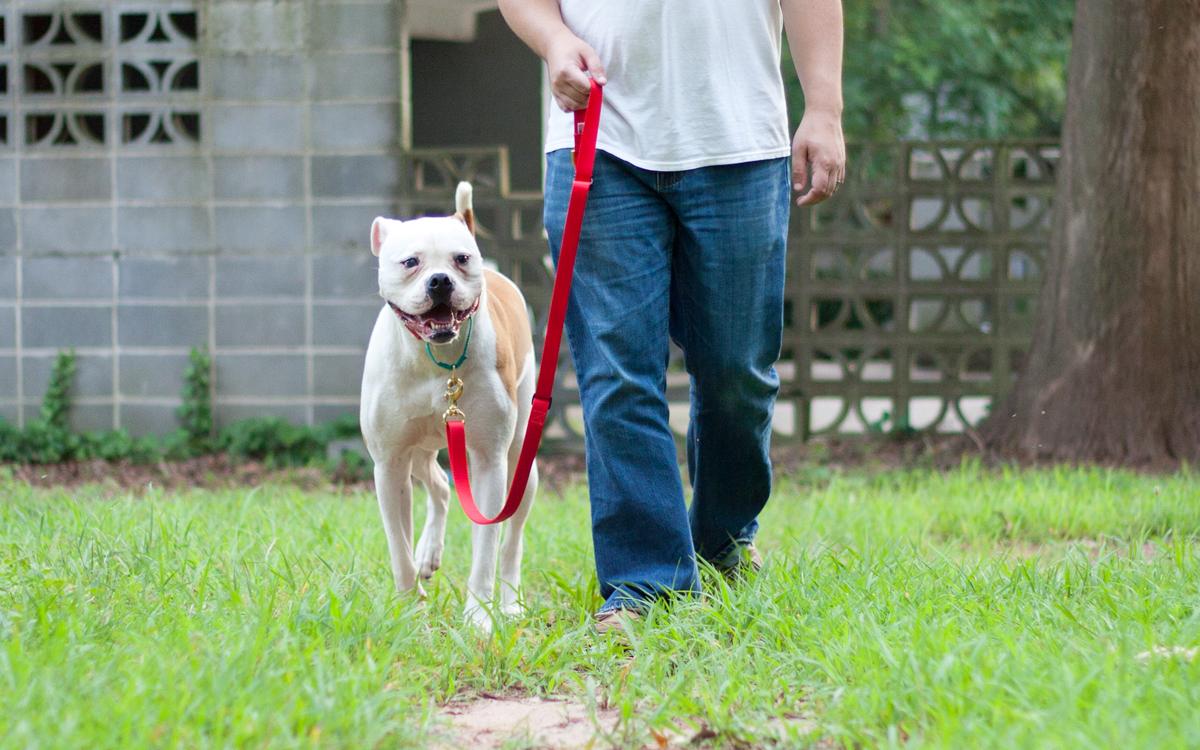 Pergunte antes de se aproximar de outro cão. Prevenção nunca é demais.