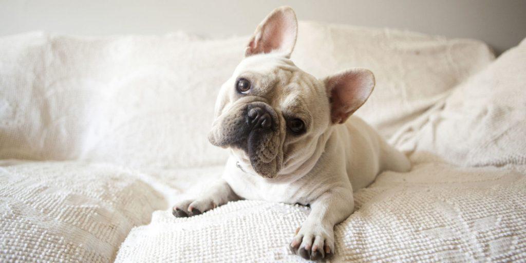 Quando o olhar vem junto da cabeça inclinada, seu cão pode estar confuso