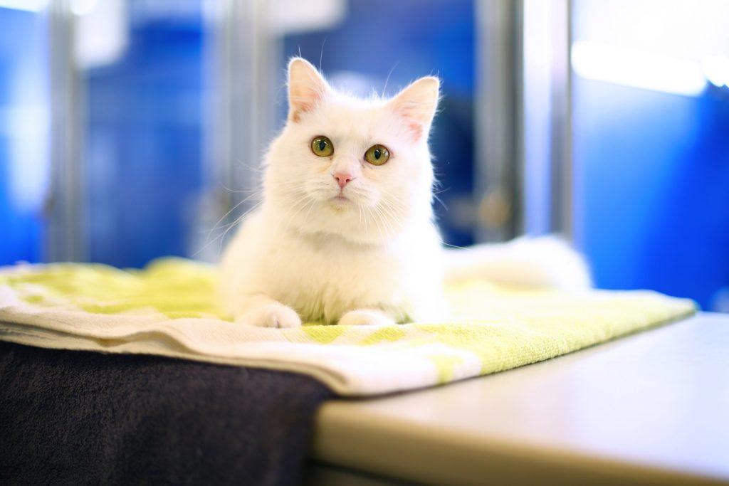 Gatos são amorosos sim, e também se dão bem com outros pets. É tudo uma questão de treino e paciência.
