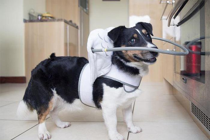 O Muffin's Halo foi desenvolvido por uma dona de cãozinho cego que queria proteger e alertá-lo aos obstáculos pela casa.