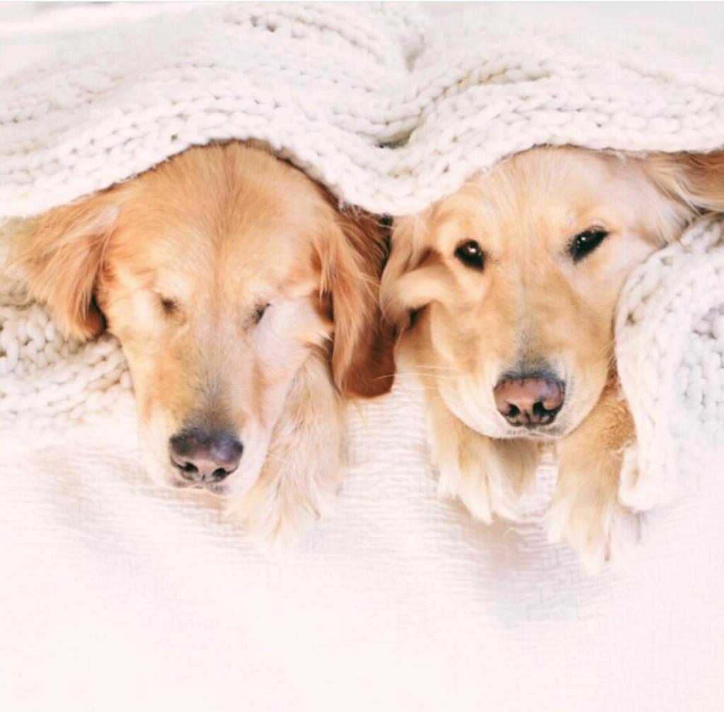 Alguns cães já nascem cegos ou ficam cegos de forma aguda e rápida, nesses casos a adaptação é mais difícil e demanda maior atenção e paciencia do dono.