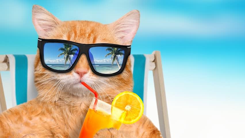 Calor também afeta os Gatos, e alguns cuidados são importantes para evitar insolação, queimaduras, hipertermia e desidratação.