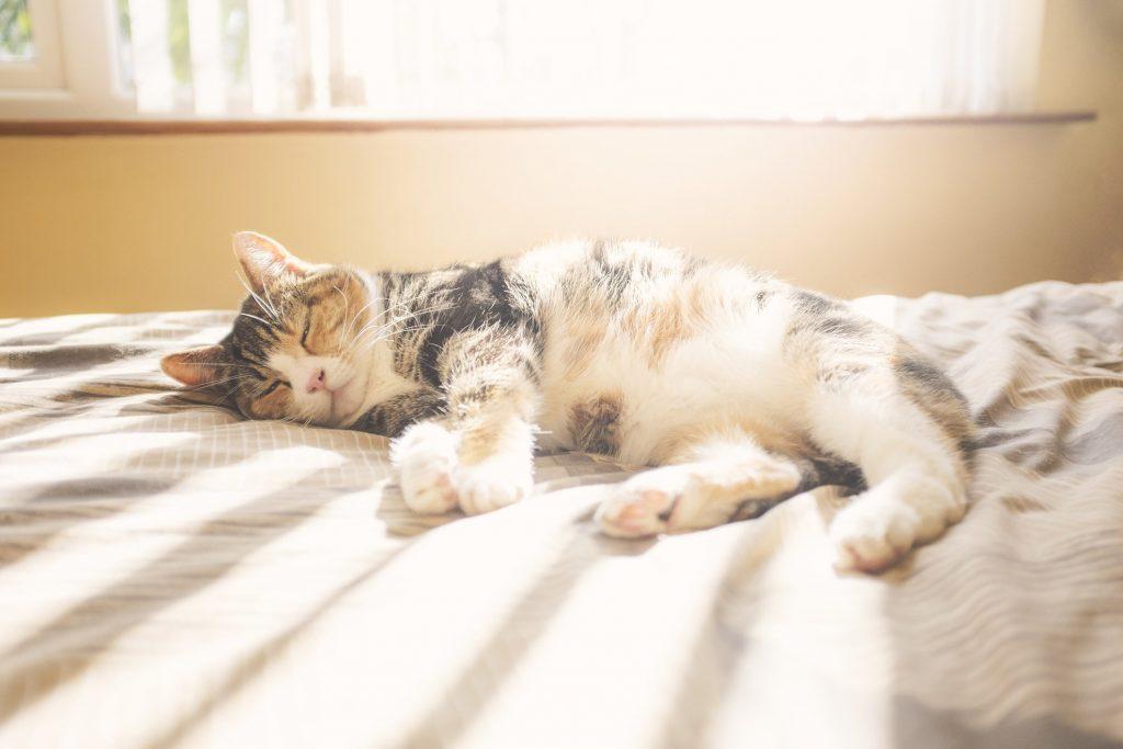 Gatos adoram banhos de sol, mas quando o calor é extremo eles precisam ter um lugar à sombra e fresco para descansar