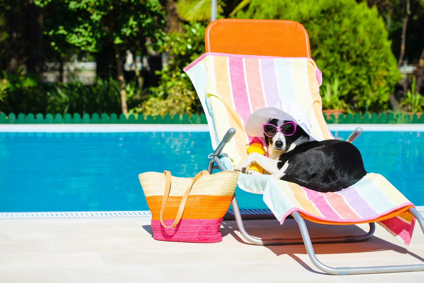 Cuidando dos pets nos dias quentes!