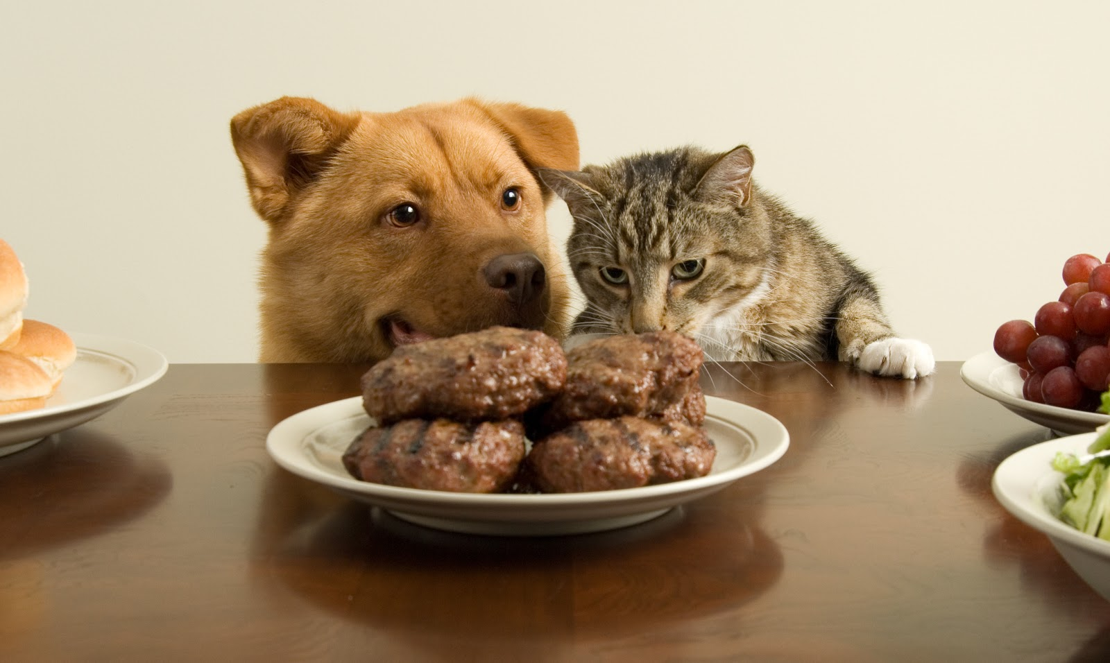 26 alimentos perigosos para os Pets