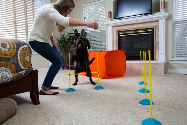 O Kit de Agility Indoor da Outward Hound é uma brincadeira super divertida para fazer na sala! Afaste os móveis e pegue os biscoitos!!