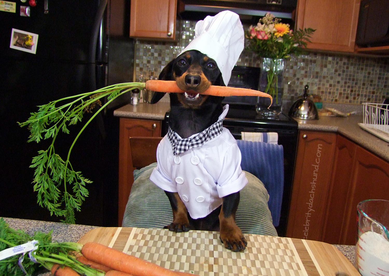 Cenoura para cães