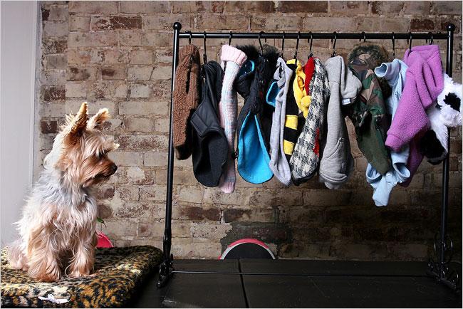 Roupas para Cães: Necessidade ou Moda?