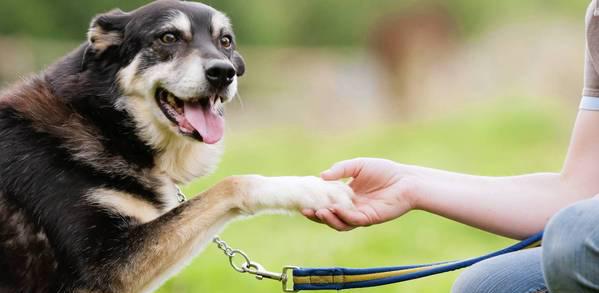 10 dicas para sociabilizar Cães de forma segura