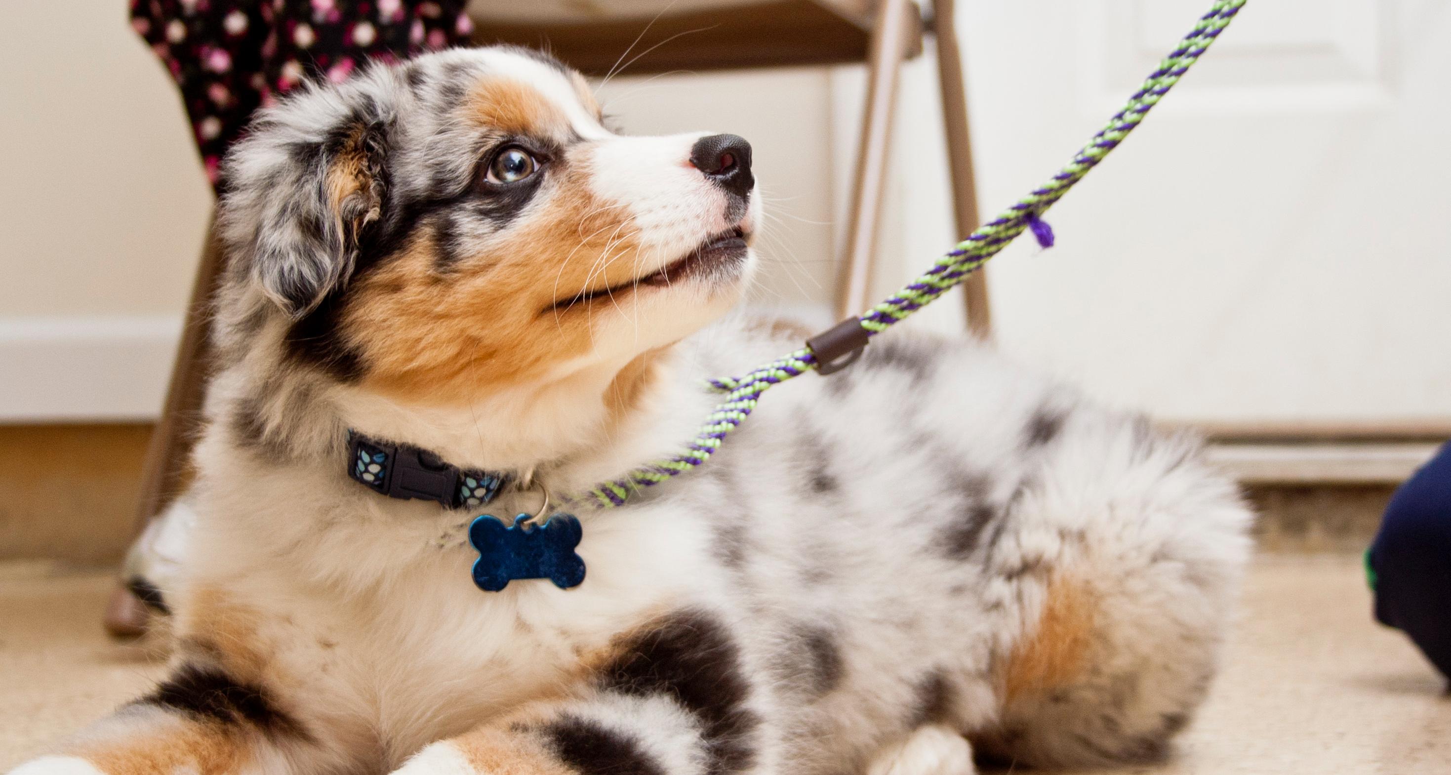 9 Erros comuns na educacão dos Cães