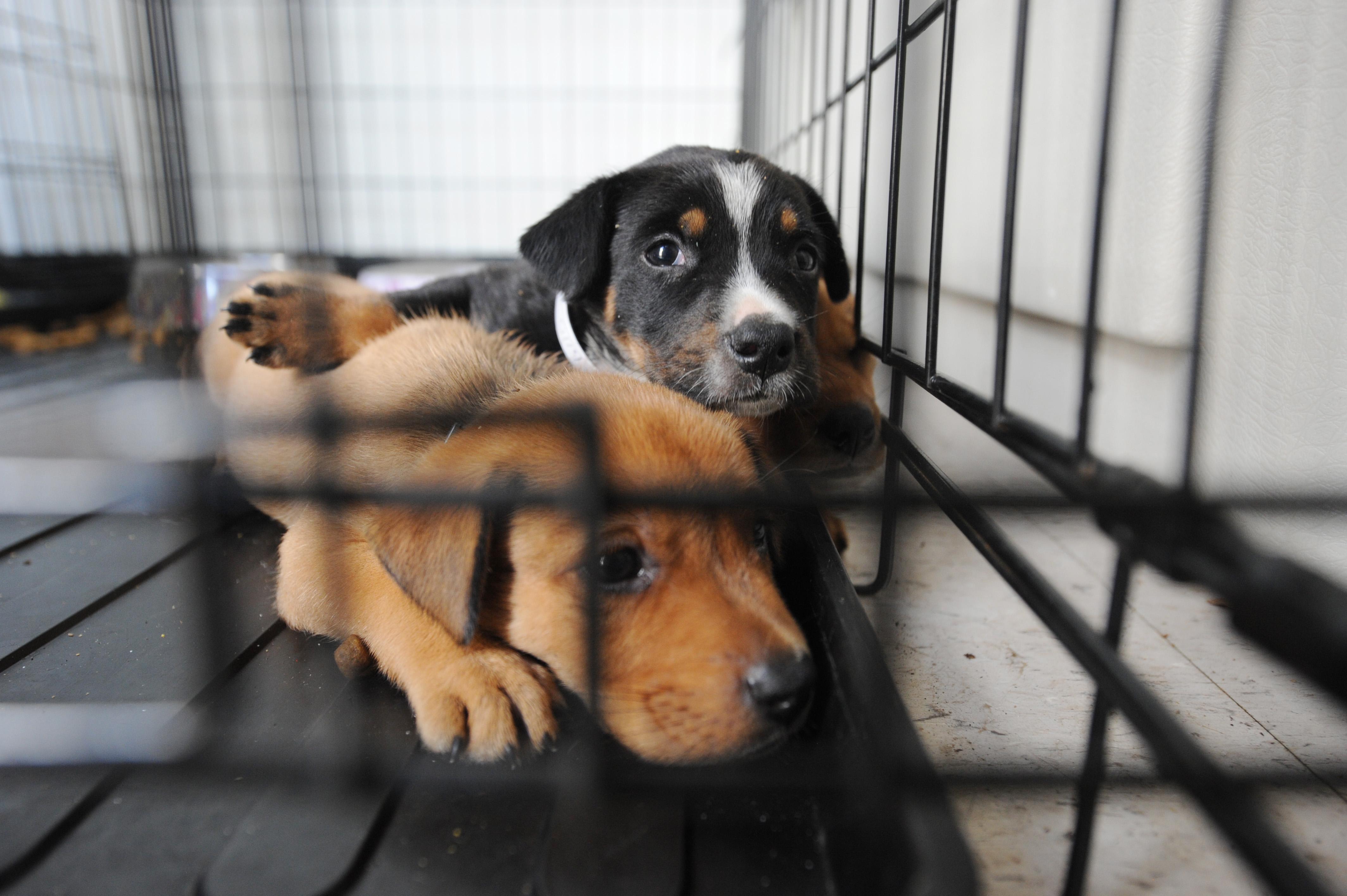 15 Reflexões antes de adotar um cão