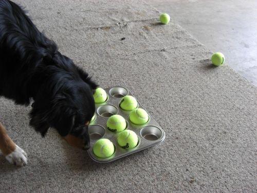 Para fazer você mesmo! Use uma bandeja de muffin e bolinhas de tênis para desacelerar as refeições do seu pet!