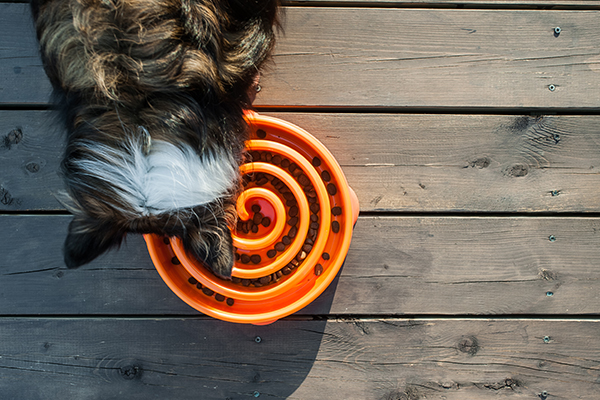 Como ajudar seu Cão a comer mais devagar