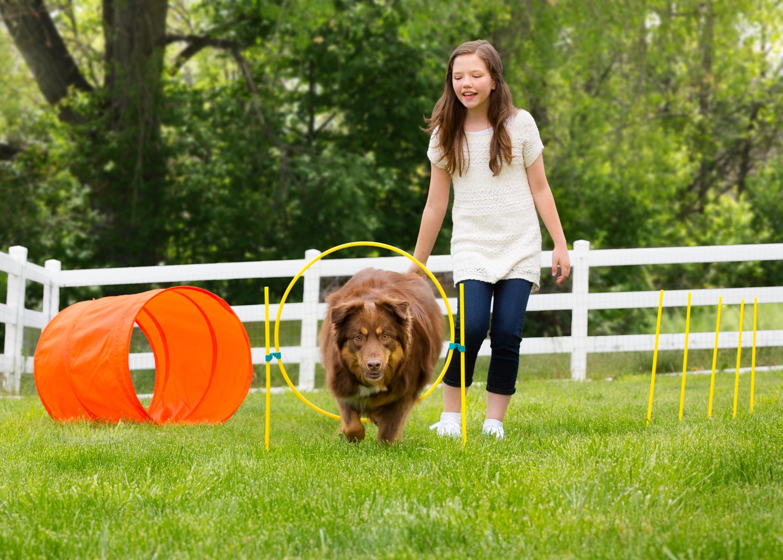 Treine Agility com o seu Cão com esse Kit de brinquedo. São 3 obstáculos, um túnel, um zig zag e um de salto, perfeito para começar o esporte!
