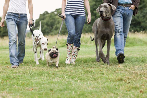 Passeios são ótimas oportunidades para expor seu cão à diversas situações e ajudá-lo a se sentir confortável com isso.