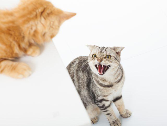 Os gatos mais frágeis, que assumem a posição de submissos e vítimas, tendem a atrair ainda mais implicância.