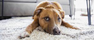 É muito fácil adotar um cão vira-lata. Depois de tomar a decisão que é a parte que exige muita reflexão e responsabilidade, claro.