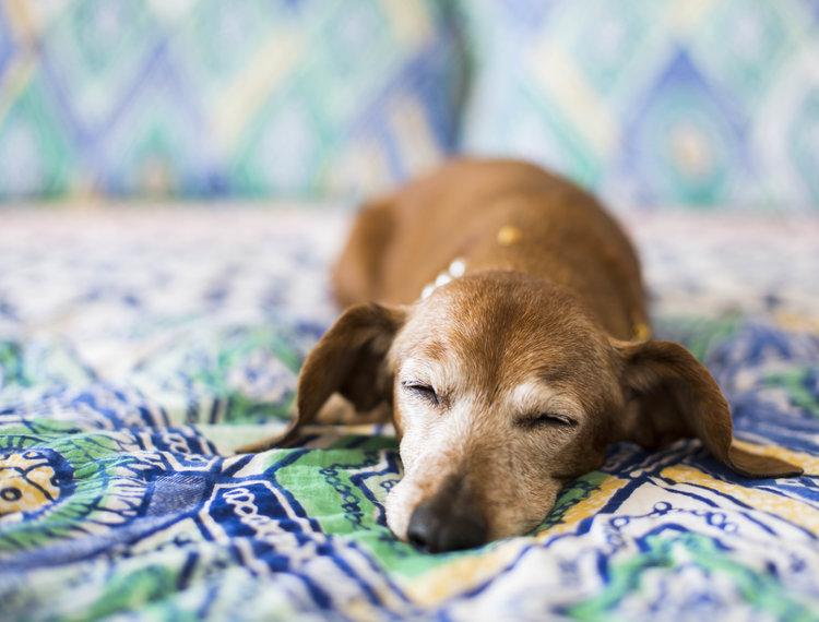 Se perceber mudanças no comportamento do seu cão, é importante procurar um veterinário.