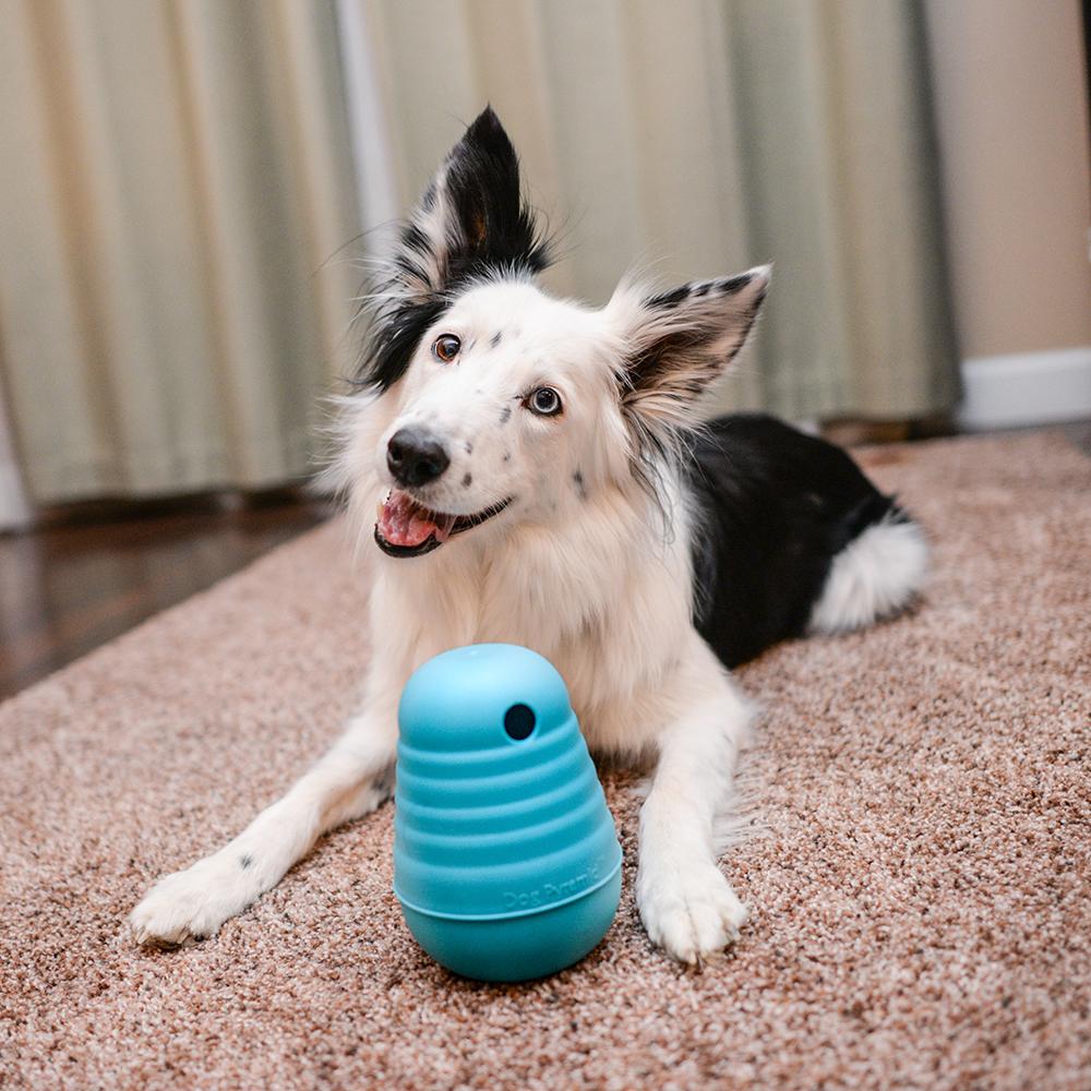 Estimular os cães é importante para manter a cabeça deles ativa