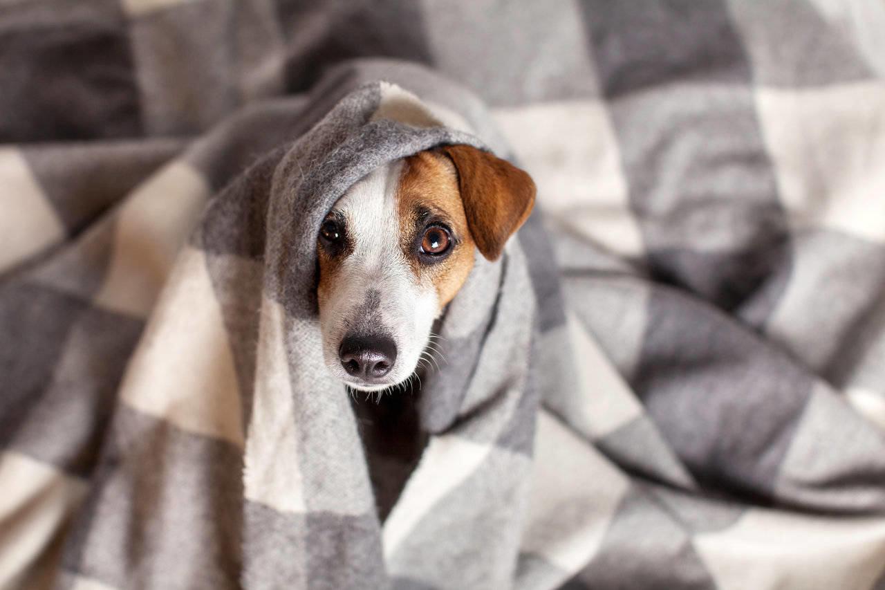 Frio pode ser uma das causas para o tremor do seu cão.