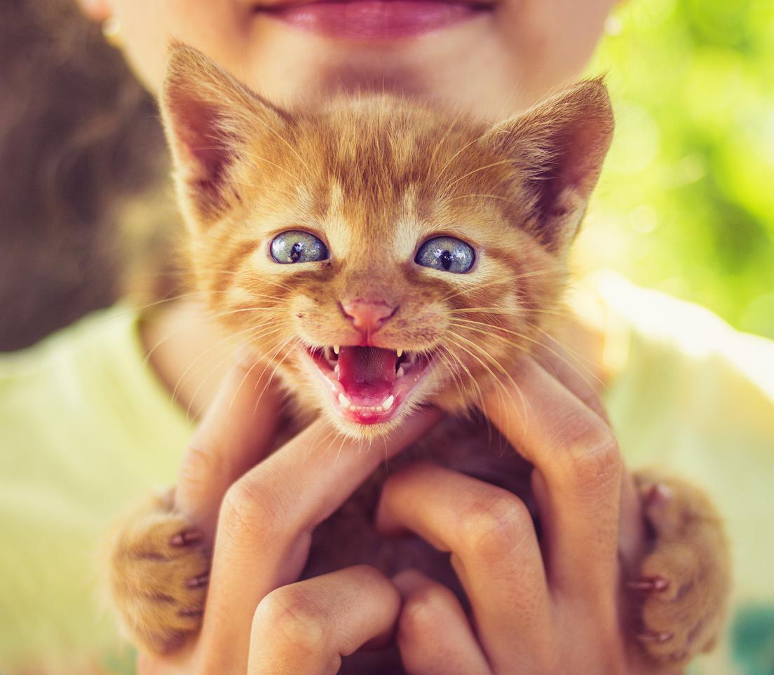 Saiba como ajudar o seu filhote de gatinho durante a transição de dentes!