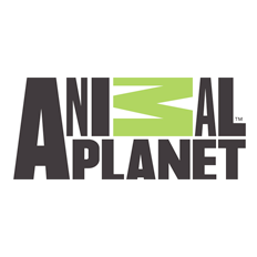 Animal Planet - Fantasia para Cães e Gatos